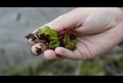 Embedded thumbnail for Salvinia Solutions